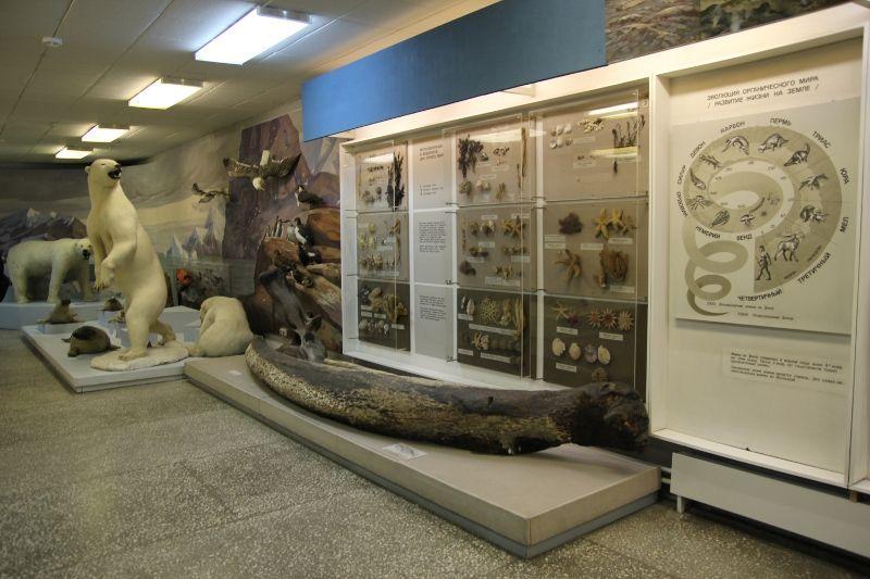 рисунок потерялся областной краеведческий музей архангельска фото программой