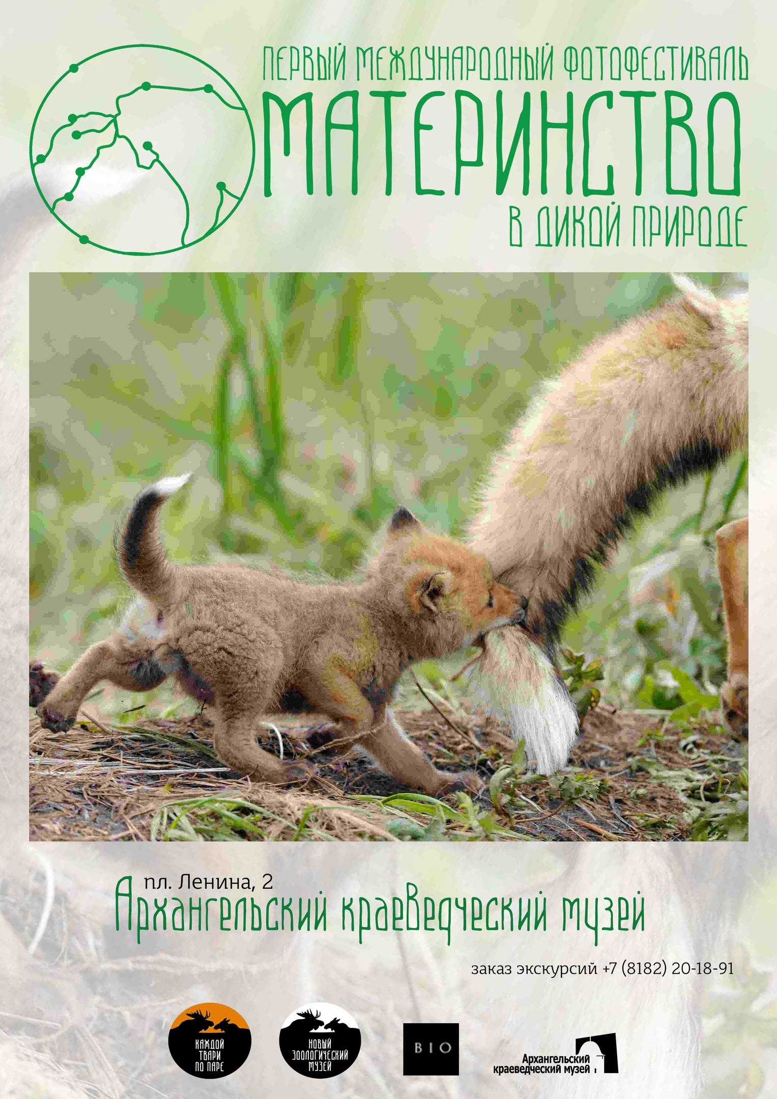 «Материнство в дикой природе»