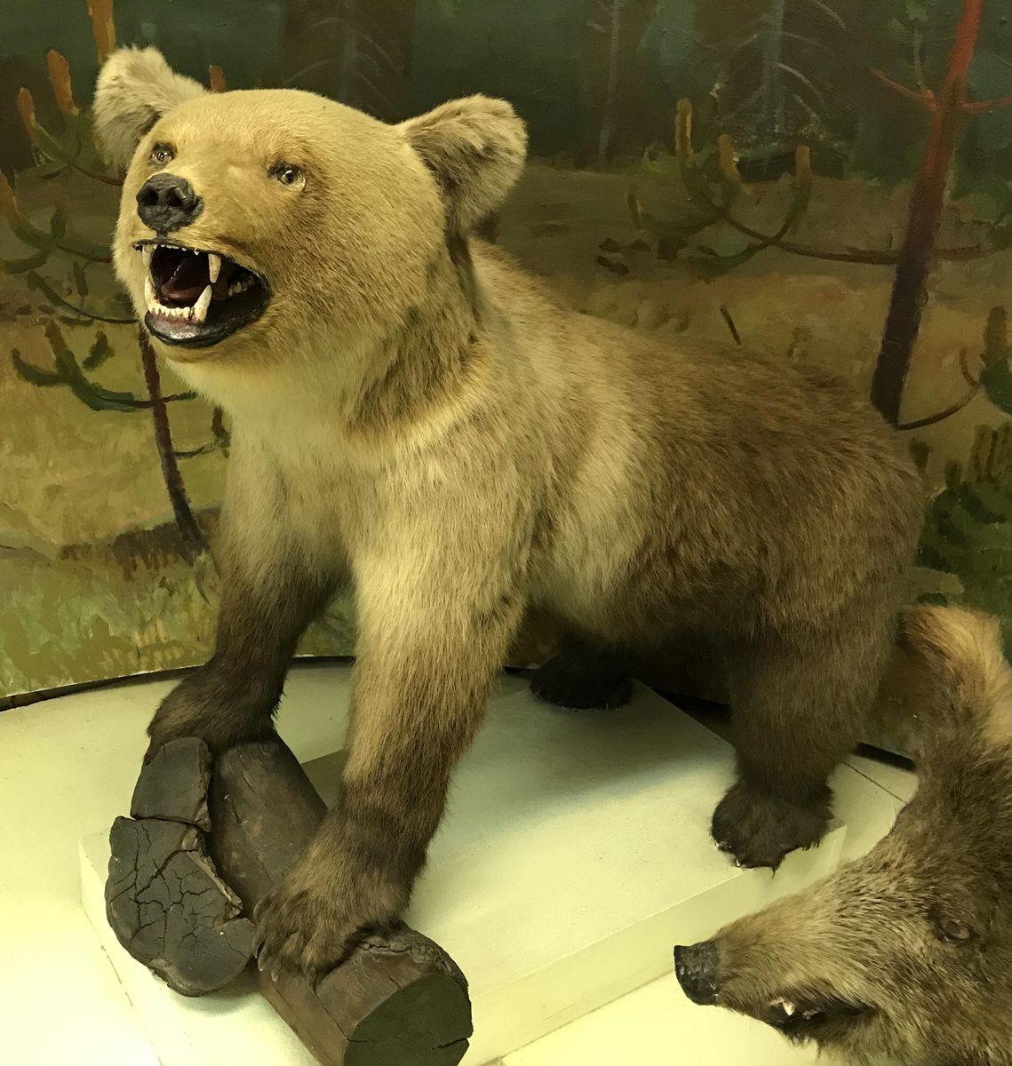 АОКМ КП-7351 Зоо-754 Чучело Бурый медведь